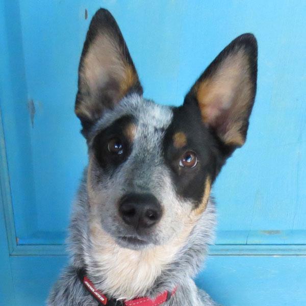 Recent Dog Training Graduates | Tucson AZ Certified Dog Trainer ...