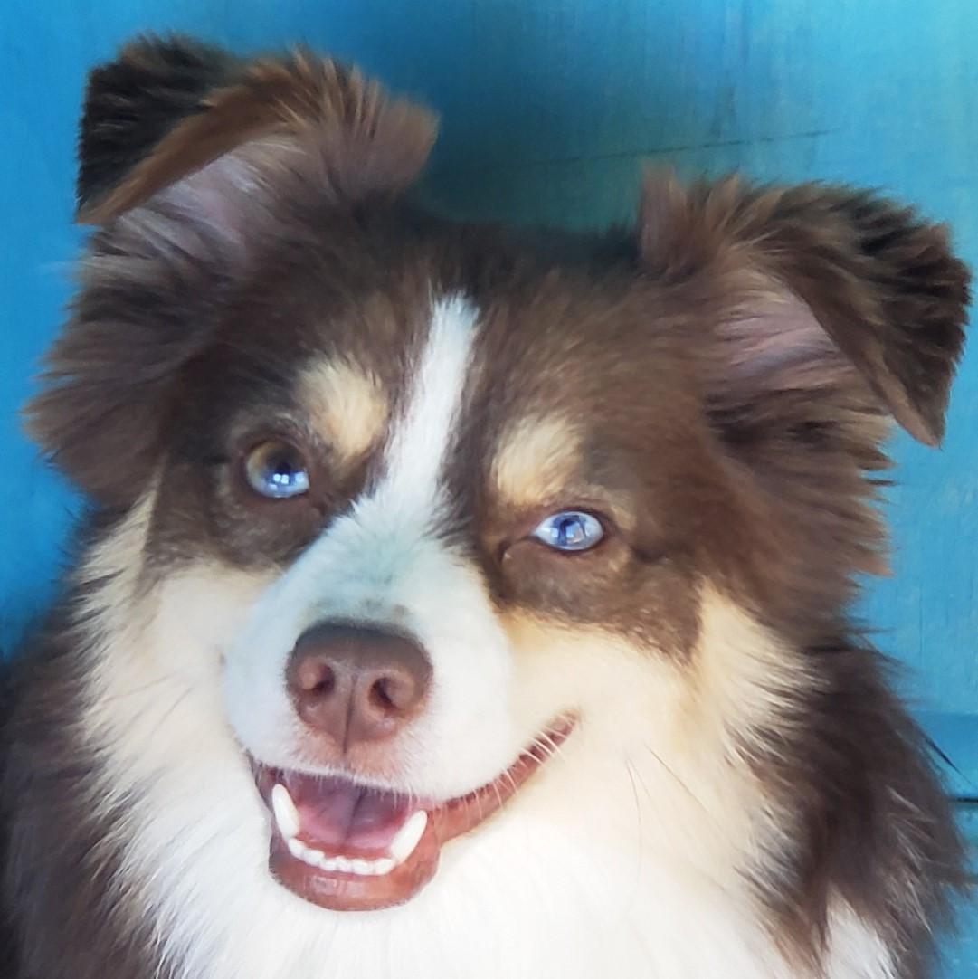 Recent Dog Training Graduates Tucson Az Certified Dog